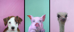 Les animaux portraitisés