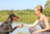 adult-animals-beautiful-275717.jpg