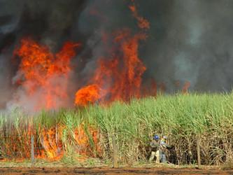 Poluição gerada no campo eleva os casos de doenças respiratórias