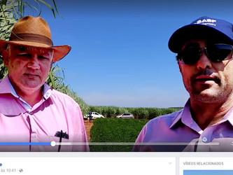 Cana Online entrevista Agrônomo e Fornecedor da AFCOP