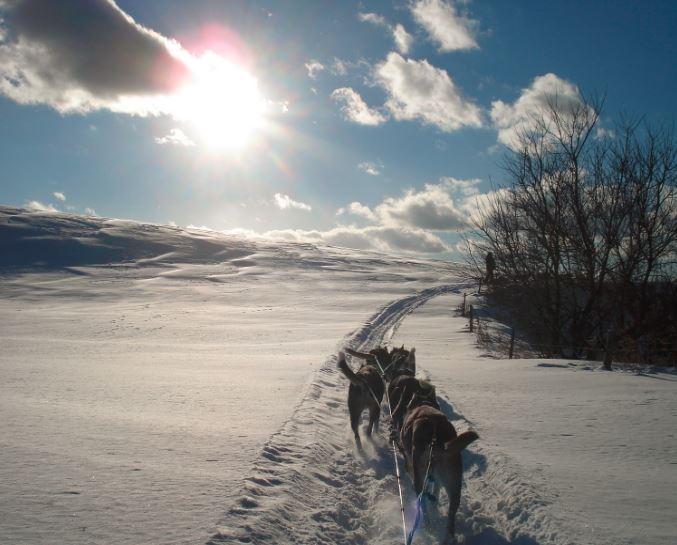 Traineau à chiens - Paysage