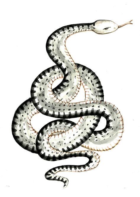 Snake_Black.jpg