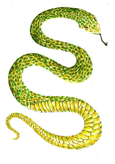 Snake_Green.jpg