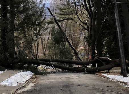 Multiple Calls of Trees Down and Power Lines In Roadway