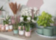 Dream Spirit - showroom beeld.jpg