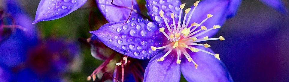 Photo 7  Wildflowers- Cronin Reserve 1.j