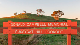 pussycat-hill-by-christine-bairstow-sm