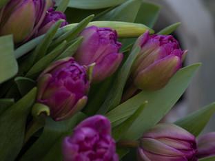 Frühling ***