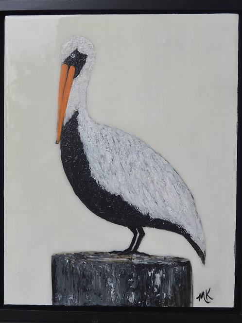 Louisiana Pelican