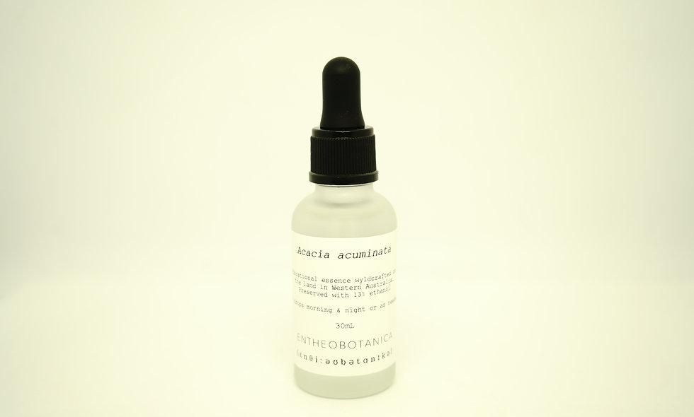 Acacia Acuminata Flower Essence || Raspberry Jam Wattle