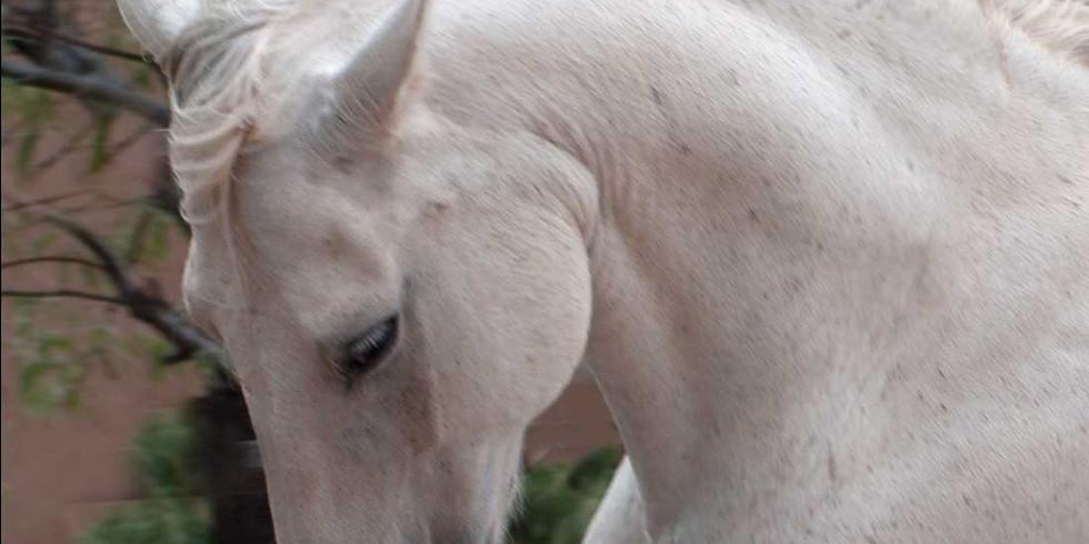 REFLECT & REIMAGINE ALL-INCLUSIVE RETREAT: A UNIQUE HORSE-HUMAN EXPERIENCE IN SANTA FE, NEW MEXICO