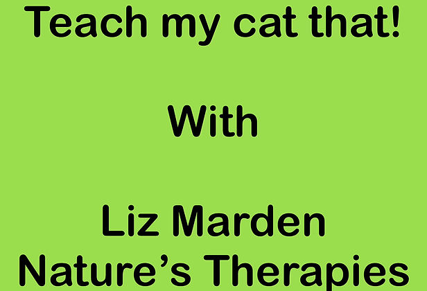 Teach my cat that! by Liz Marden - teach your cat a range of tricks and basic obediance to increase your bond and inpress your friends!