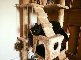 Toni playing in cat tower.JPG