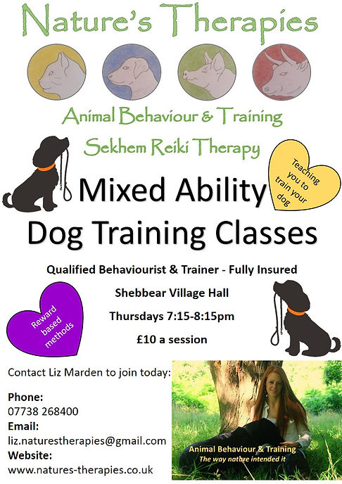 Dog training classes Shebbear Village Ha