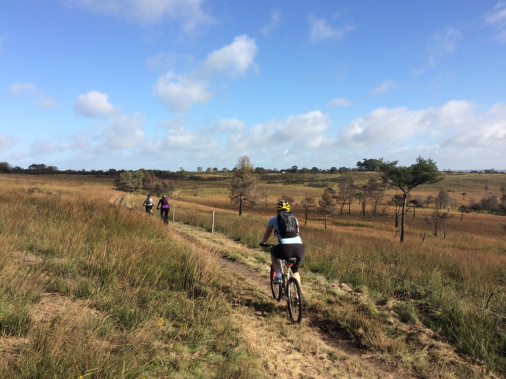 Mountain biking on Woodbury Common, Devon