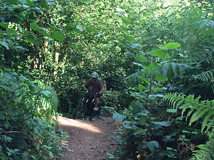 Mountain biker on singeltrack, Woodbury Common, East Devon