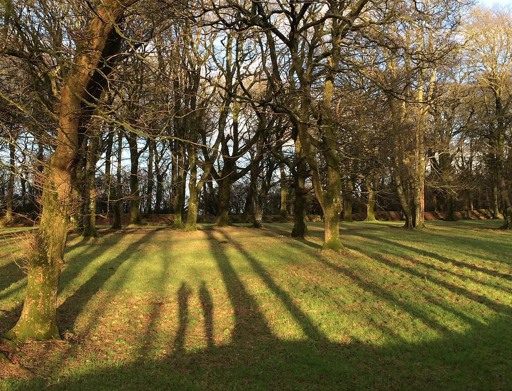 Evening shadows at Blackberry Camp