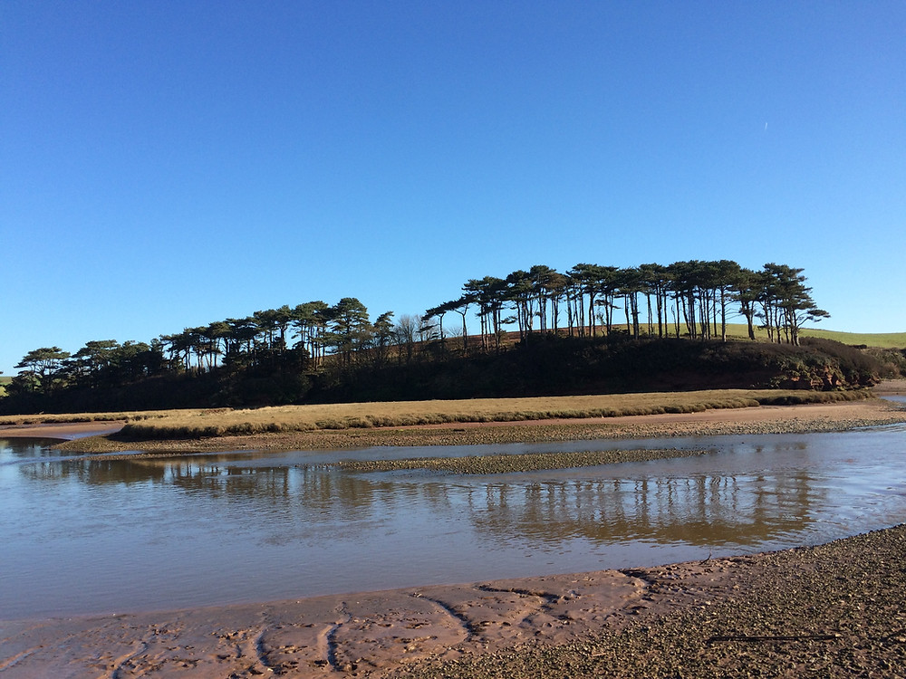 Trees at the end of Budleigh Salterton beach