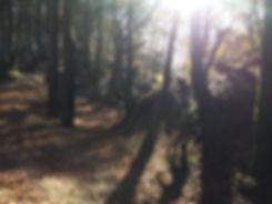 Mountan biking in a Devon beech wood