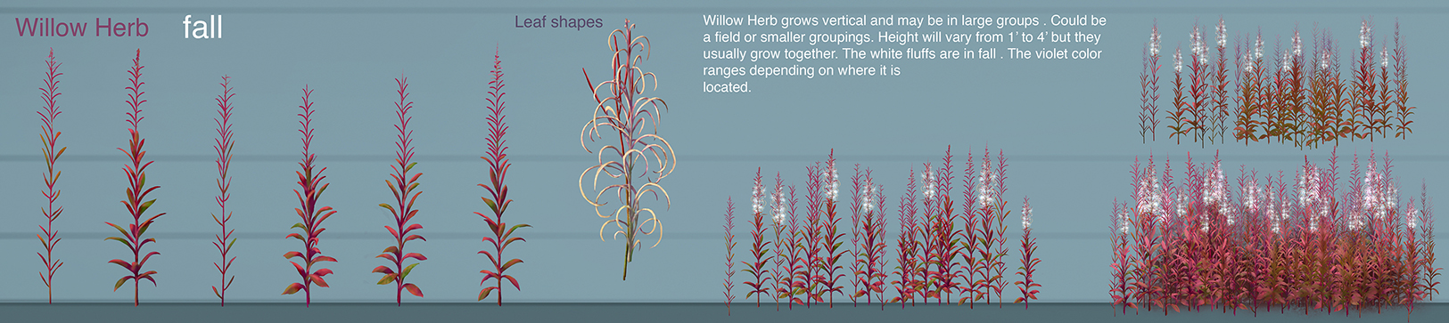 willow_herb_final_fall3_stems