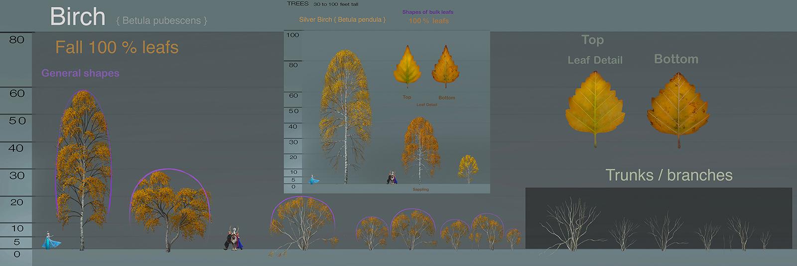 birch_final_fall_general_shapes