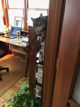 cat on bookshelf.jpg