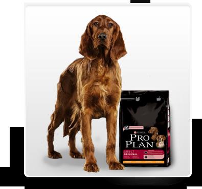 PURINA PROPLAN - מזון כלבים