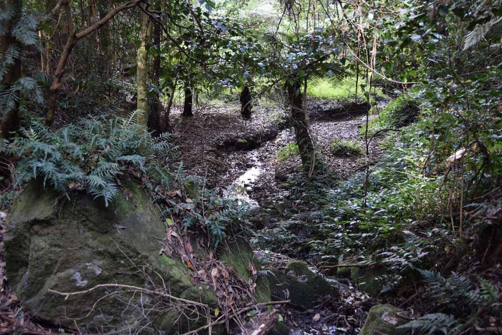 Treefern Swamp