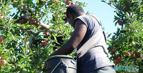 Envisioning a Pacific labour market