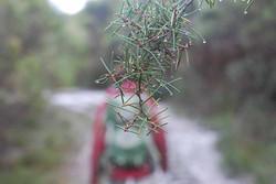 Walking in Budderoo National Park