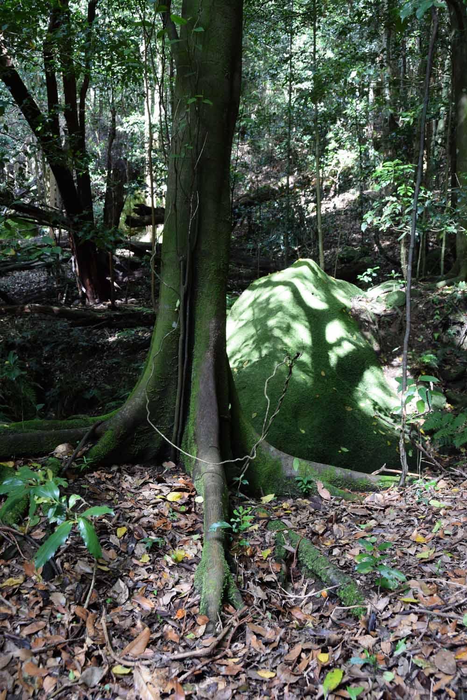 Duncania Green