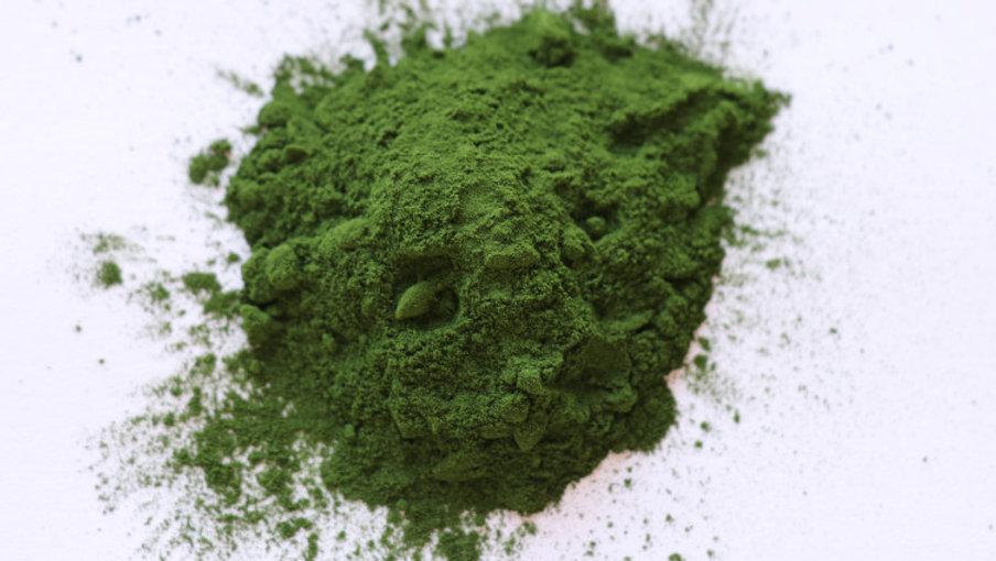 microalgae.jpg