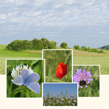 Webbild_Lebens_und_Lernräume_floral_whi