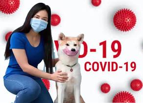COVID-19, a psy i koty