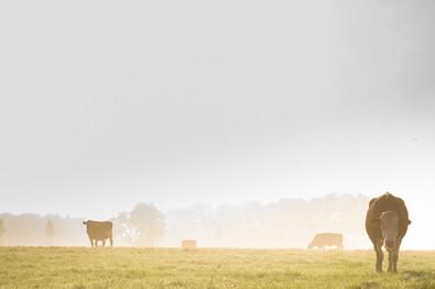 McHenry County Farm