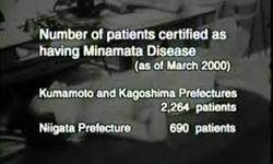 Minimata Stats