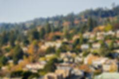 Berkeley Hillside (Medium).jpg