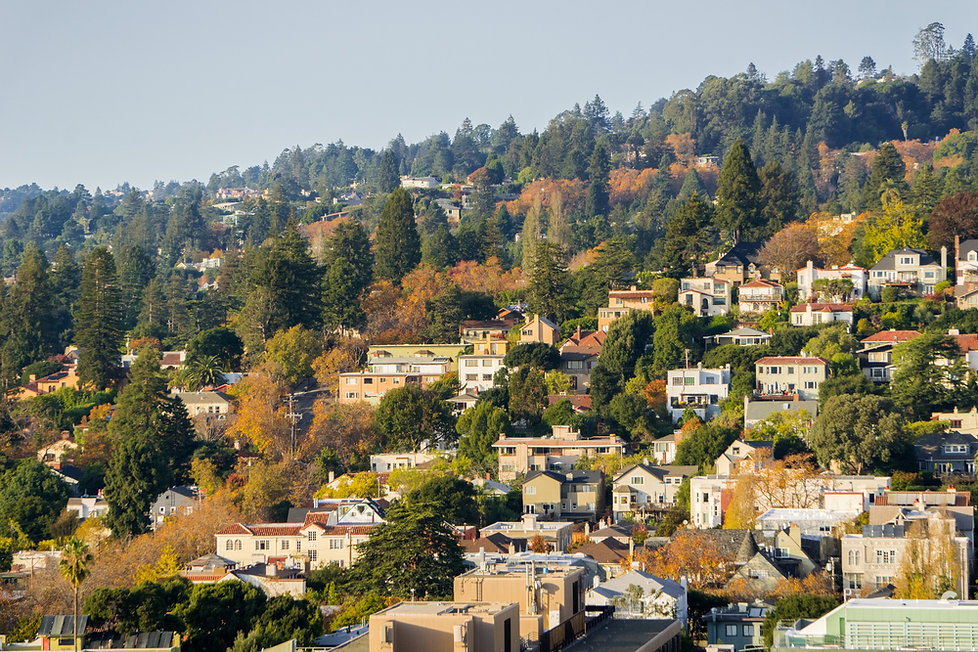 Berkeley Hillside (Medium).jpg