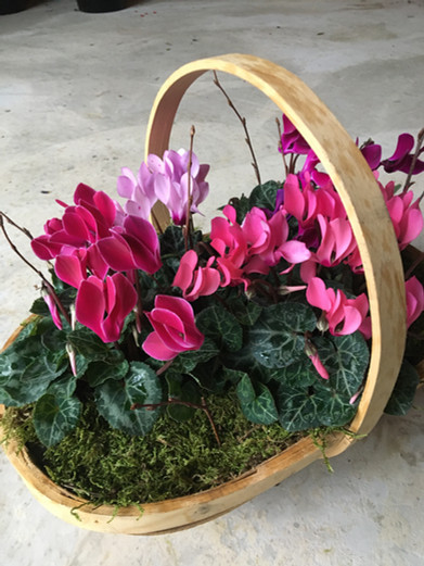 Cyclamen Basket