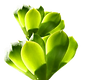 수중 식물