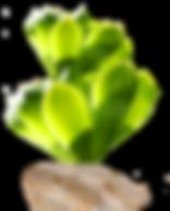 Plante sous-marine