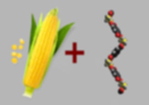 Corn & Molecules.jpg