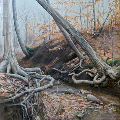 Roots Hidden