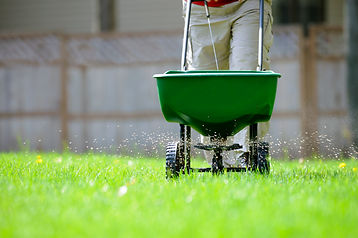 LAWN GUARD OVER SEED