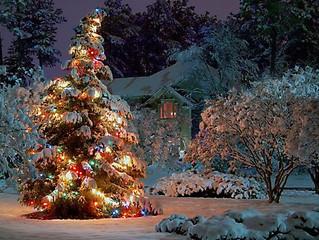 Новогоднее дерево в саду