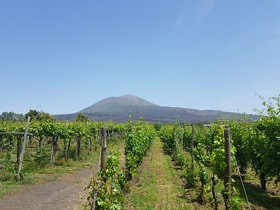 Pompéi et dégustation de vins