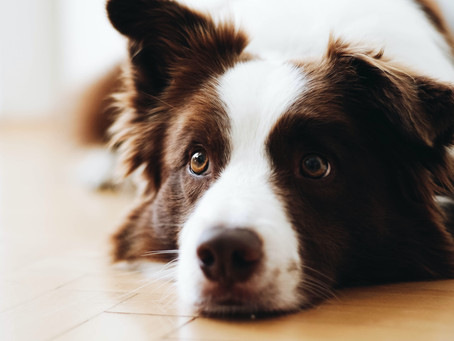 3 Diseases You Can Easily Prevent for Your Pet