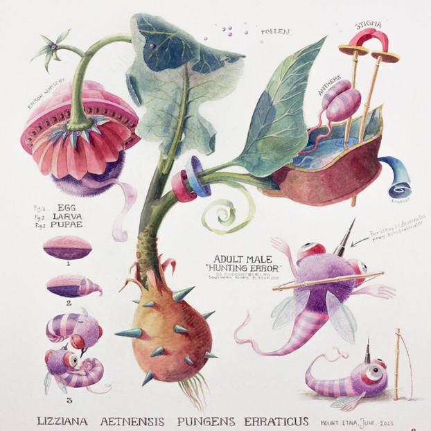 Lizziana Aetnensis Pungens Erraticus - SOLD