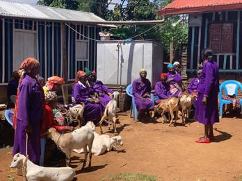 Widows and goats
