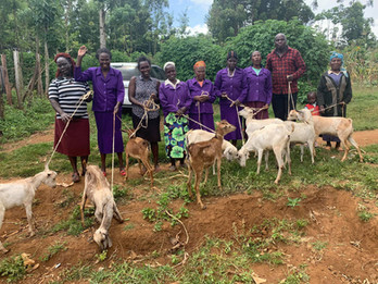 Widows with goats